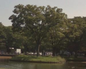 Tree - PANONO